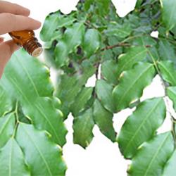 Peru Balsam Resinoid