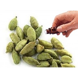 Cardamom Seed essential oil